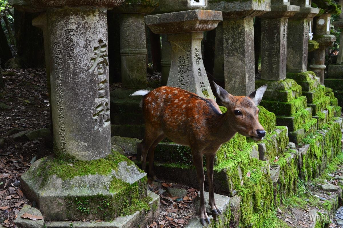 Un giorno a Nara