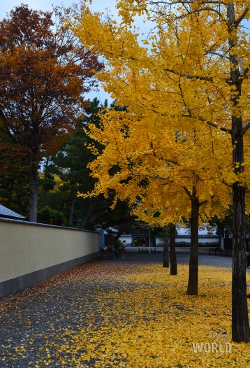 kyoto-imperial-palace-4