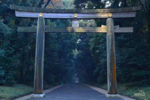 I tori del tempio Meiji sono i Tori in legno più grandi dell'intero Giappone