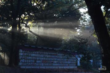 """Il famoso """"muro di barili di sakè"""" al tempio"""