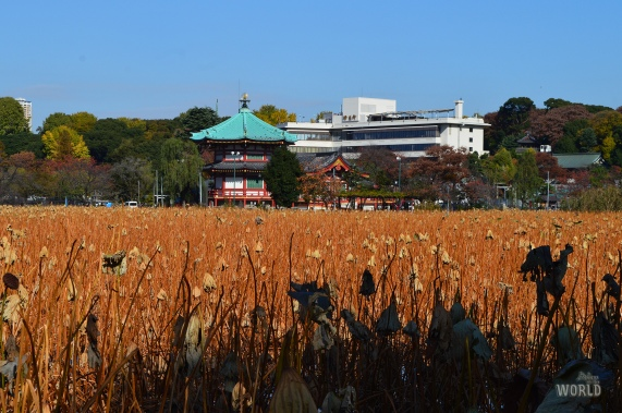 shinobazu-pond