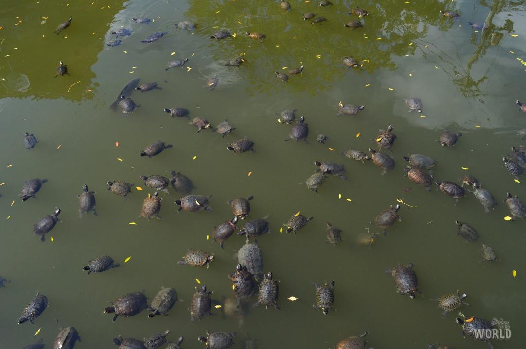 stagno-delle-tartarughe