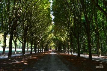 Il viale alberato del Parco lungo 1200 metri